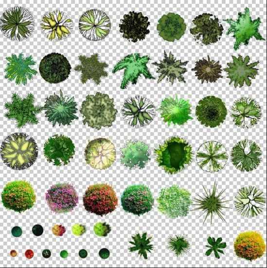 psd格式的彩色植物平面图免费下载