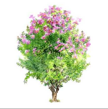 环艺树木手绘图片展示