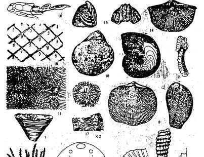 地球演化 晚古生代地球演化