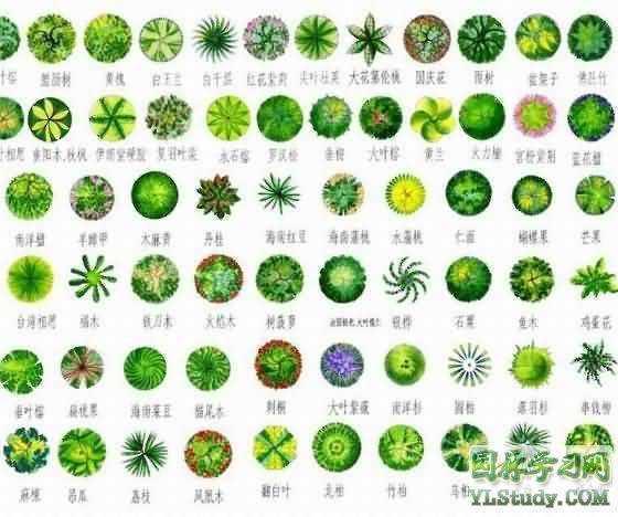 园林植物图例cad免费下载