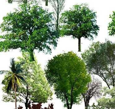 手绘景观树灌木