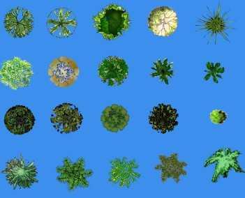 园林平面植物素材